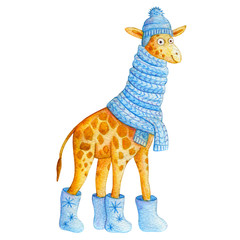 Cute cartoon watercolor giraffe in a blue knitted scarf, boots with the snowflakes and hat with pompom. Cute hand made illustration for children