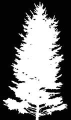 high fir white silhouette illustration