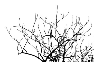 tree branches silhouette with white background