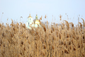 Dry reeds in wintertime and Christian church in background