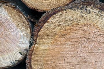 closeup of cut spruce tree trunks
