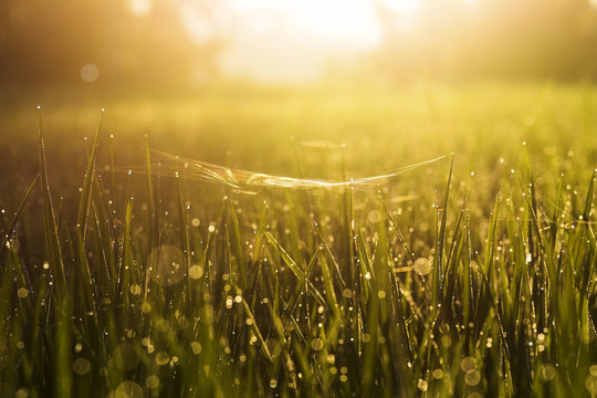 Green grass with water blurred background