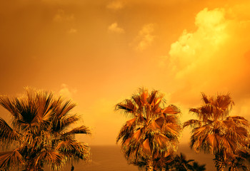 Golden vintage landscape with tropic palm trees against sea and sky at sunset light