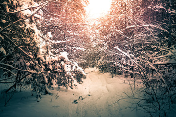Winter magic forest.Snow nature background