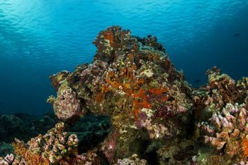 Beautiful coral at Maldives