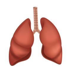 Human Lung anatomy diagram. Vector illustration