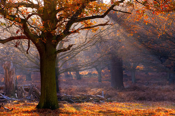 Rays of sunlight pouring through woods in Richmond Park, London