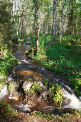 Лесная речка с питьевой водой на Большом Соловецком острове