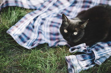 Adorable black cat lying outdoors