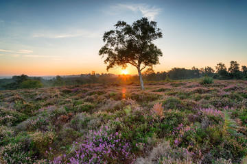 Wall Mural - New Forest Sunrise