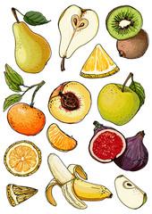 Set of fruits drawn a line on a white background. Vector sketch. Sketch line. Apple, pear, peach, lemon, orange, lime, Tangerine, kiwi, figs, banana