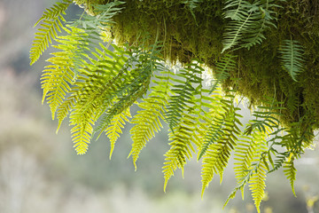Close up of moss covered tree in a forest with a fern growing around it; Oregon, United States of America
