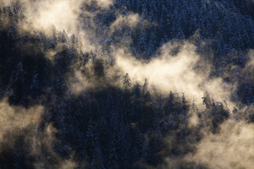 Mist rising in morning sun over snowy old growth timber above the Hoh River; Washington, United States of America