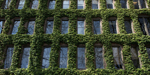 Vines Growing Up The Side Of A Buildings Around The Windows; Seattle, Washington, United States Of America