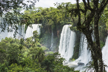 Line of Iguazu waterfalls seen between trees; Parana, Brazil