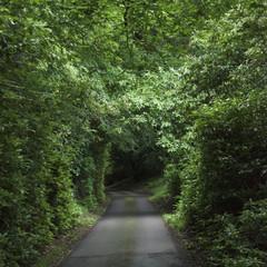 A path with a canopy of lush foliage; Scotland