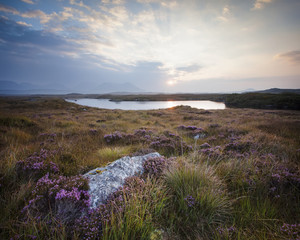 Daybreak over Connemara Bog with heather in bloom; County Galway, Ireland