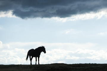 Silhouette of of a wild horse, Theodore Roosevelt National Park; North Dakota, United States of America