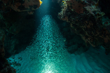 Sunlight shining over group of fish swimming in the sea