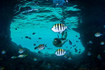 Woman snorkeler and angelfish, Thunderball Grotto, Staniel Cay, Bahamas, Caribbean
