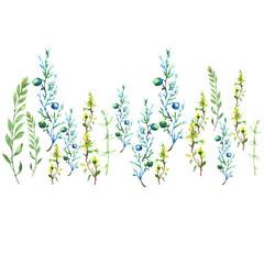 Watercolor set of drawings of plants, wild herbs, wild flowers, leaves, juniper. Vintage border, card.