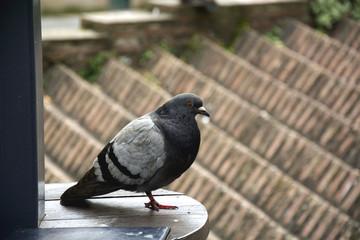 Bird 88