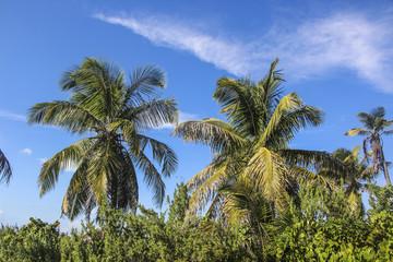 пальма, небо, синий, зеленый, день, солнце, отдых, жара, карибы, пейзаж, мальдивы, тропики, релакс, дерево, кокос, листья, рай, путешествие, лето, фон, 2