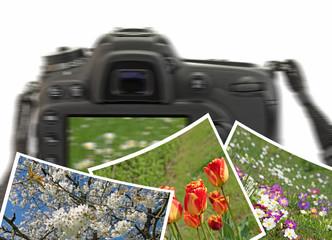 Naturfotografie, Frühling, Blüten