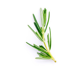 Closeup branch of fresh rosemary  isolated on white background.