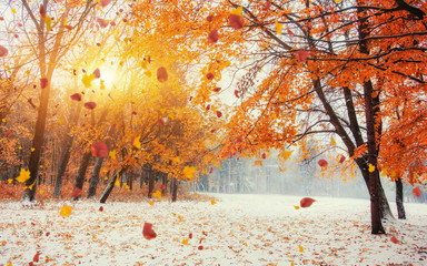 Light breaks through the autumn leaves of trees