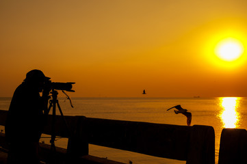 Silhouette Photographer man traveler in sea summer sunset and bird beautiful