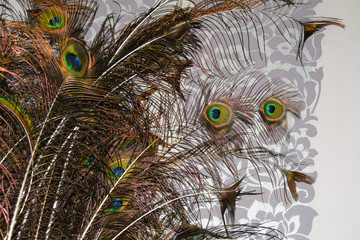 Canvas Prints Hand drawn Sketch of animals Peacock feather, feather, tail, tail feather