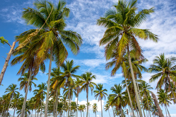 Amazing view on green palms on blue sky background