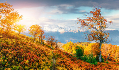 mountain range in the Carpathian Mountains in the autumn season.