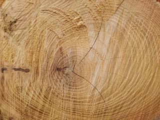 Fototapeta stos drzewa, posiekane pnie, drewno opałowe obraz