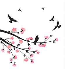 Spring sakura blossom