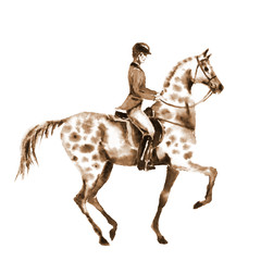 Watercolor sepia rider and horse on white. Horseman in jacket on stallion. England equestrian sport. Hand drawing illustration.