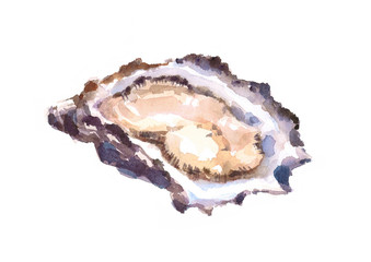 Oyster hand painted watercolor food illustration isolated on white background