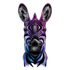 head of Zebra, vector color drawing, black, blue, and purple