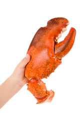 Lobster Claw