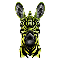head of Zebra, vector color drawing black yellow and green
