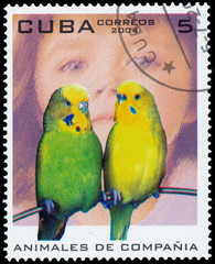 stamp printed in Cuba shows image of parrots