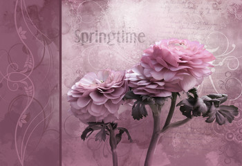 Pink spring time flower - Artistic background for your own creations