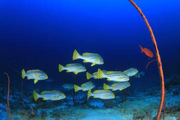 Underwater ocean reef with tropical fish
