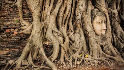 Buddha Head Tree Wat Maha That (Ayutthaya). buddha statue trapped in Bodhi Tree roots. Ayutthaya historical park