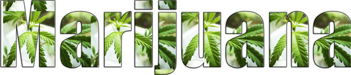 Marijuana Logo High Quality