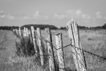 Old fence posts in field black and white