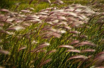 Wehendes Gras