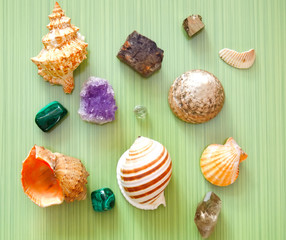 sea shells and stones on green background