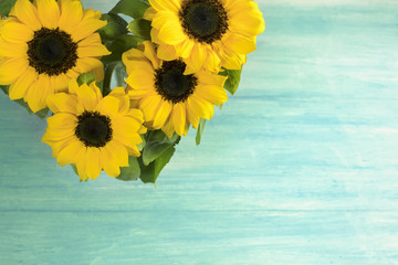 Yellow sunflowers with green leaves, on light texture